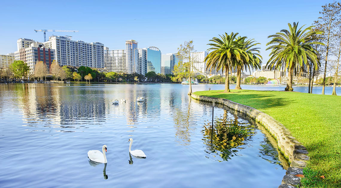 Lake in Orlando with swans, palm trees and buildings in the background