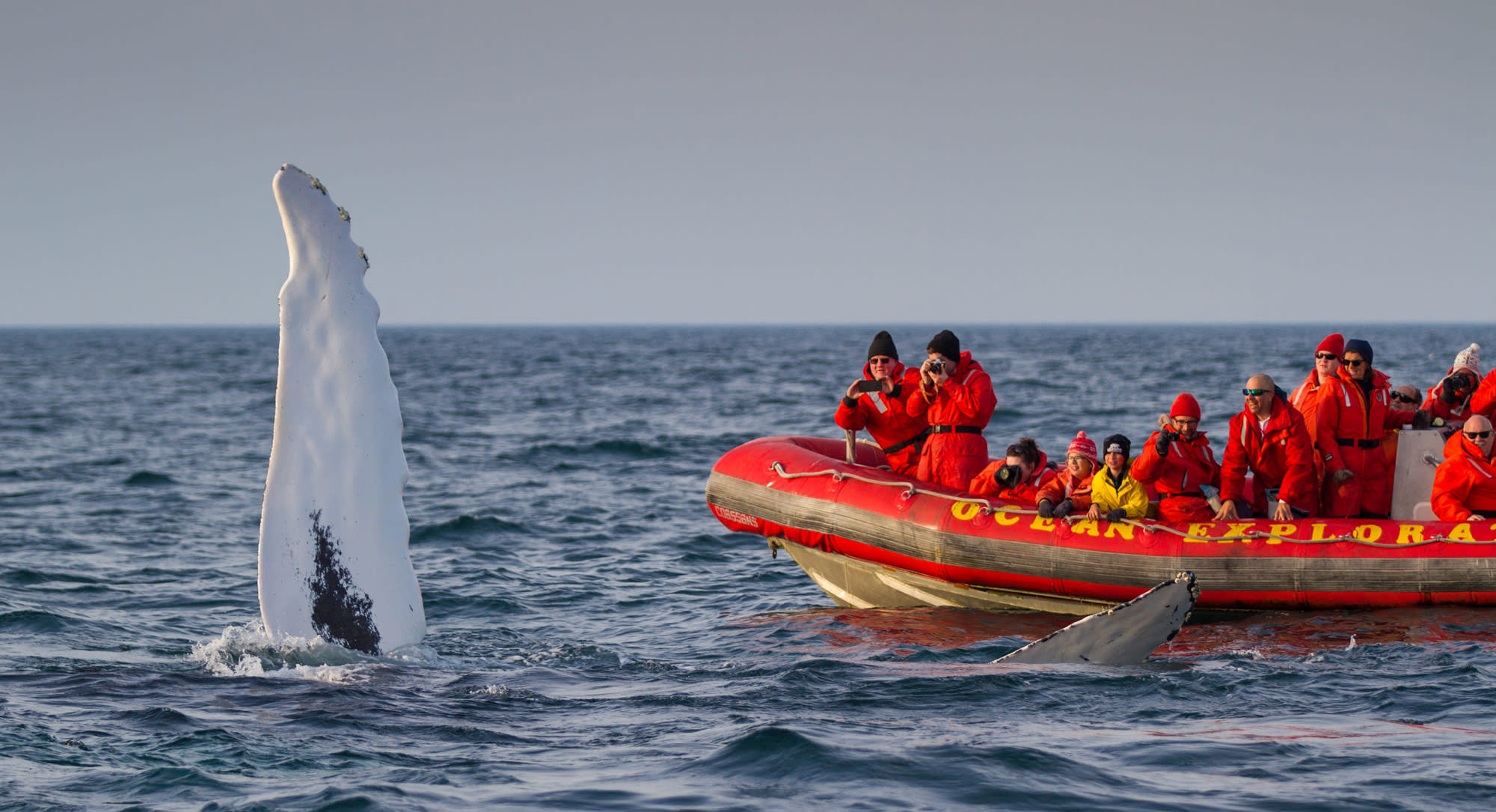 Whale Watching expedition Nova Scotia