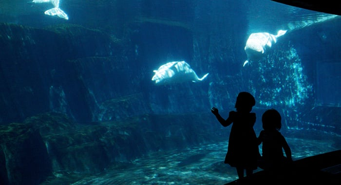 Children at the Vancouver Aquarium