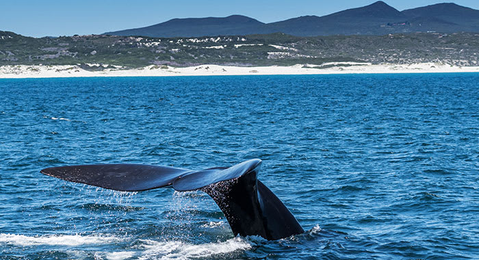 Whale watching in southern hemisphere