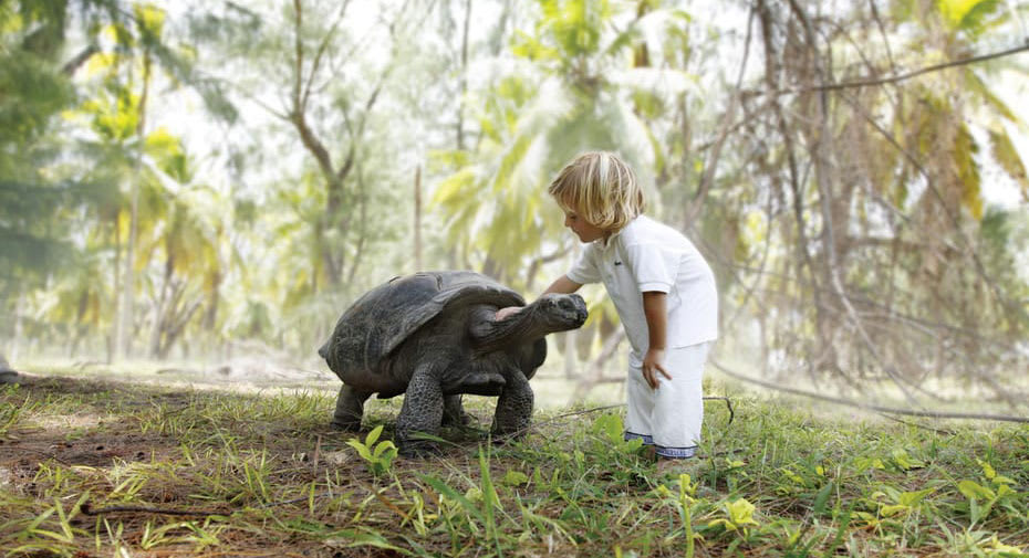 Little boy stroking a tortoise at the Tortoise Sanctuary