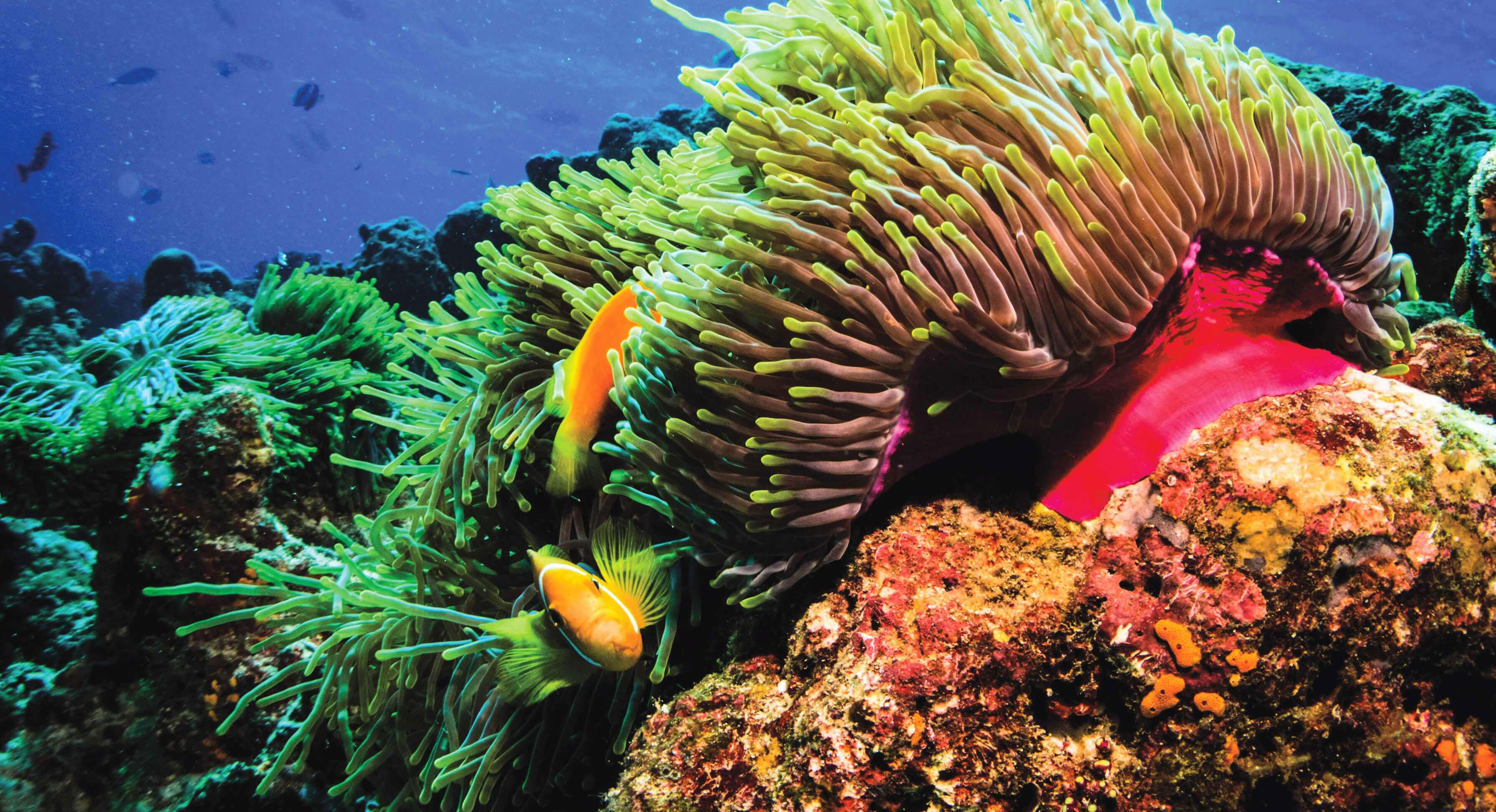 House coral