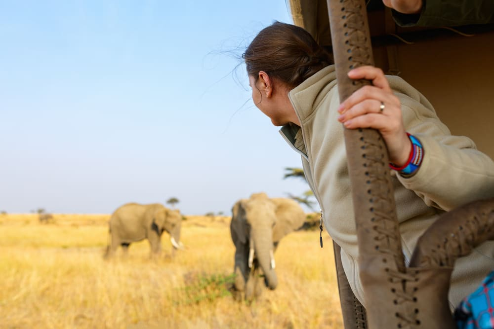 Woman on safari watching the elephants behind her