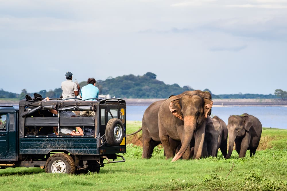 Sarafi truck watching adult and baby elephants