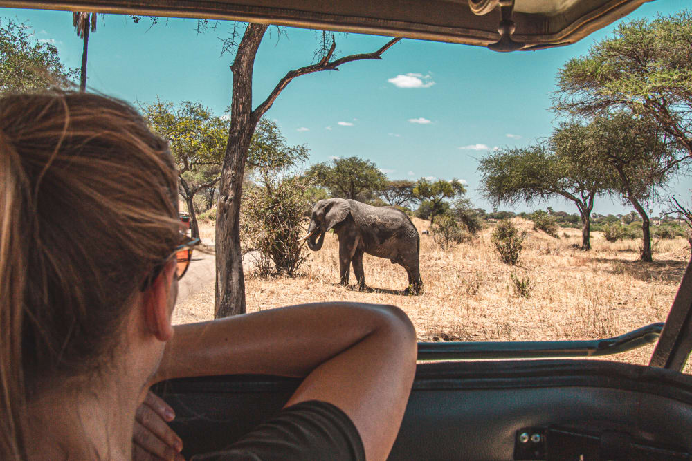 A man and woman watching a young elephant