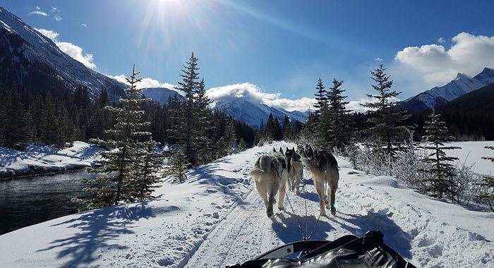 Huskie sledding