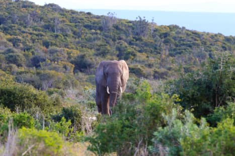 My Elephant Attack: Ten Years Later