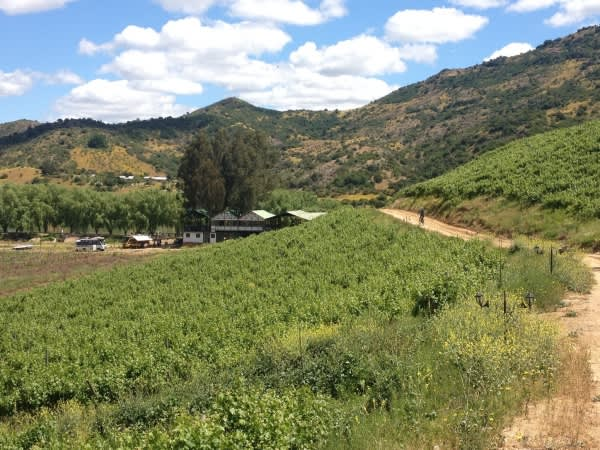 TDA-vehicles-off-in-the-distance-below-the-vineyard-600x450