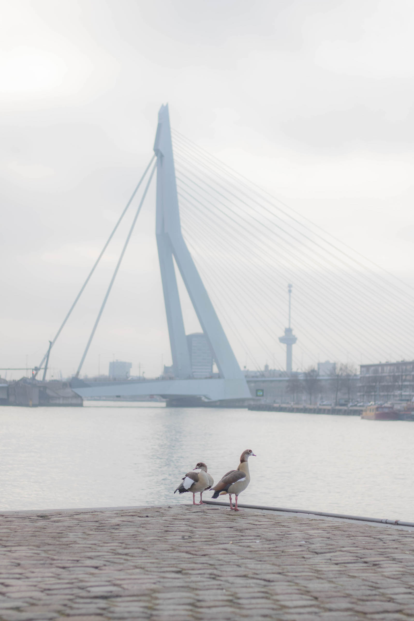impression photo of rotterdam