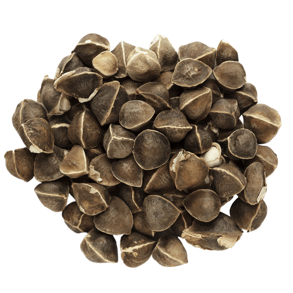 Pile of moringa seeds