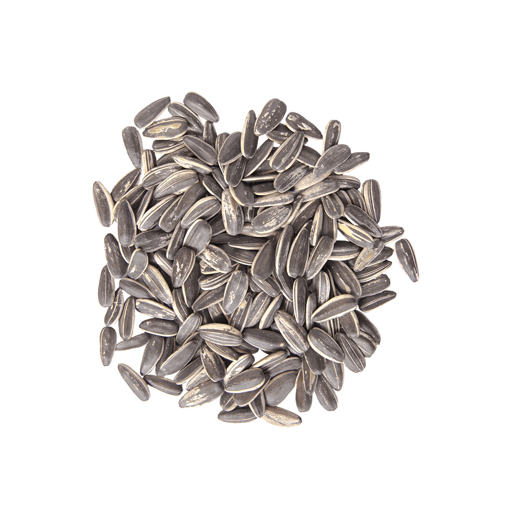 Pile of sunflower seeds