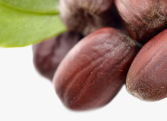 close up of Jojoba seeds