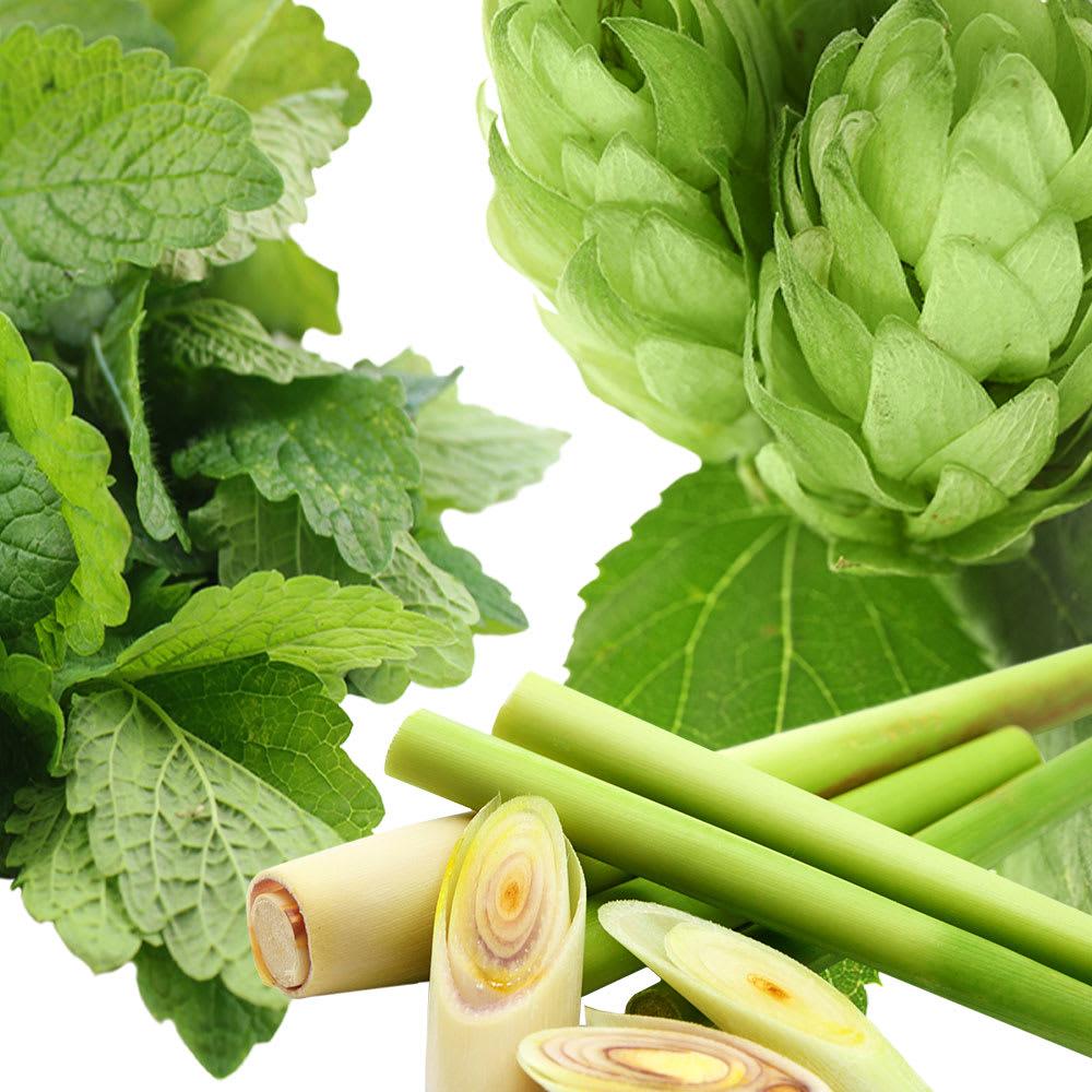 cropped images of chamomile, hops, rosemary, mint, yarrow, lemongrass