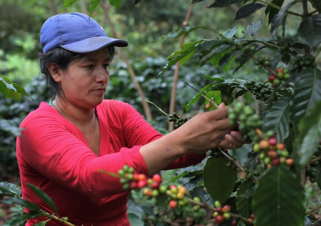 How can coffee become a better tool for development? | Devex