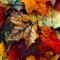 Leaves%2520profile