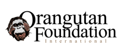 Orangutan%2520foundation%2520international