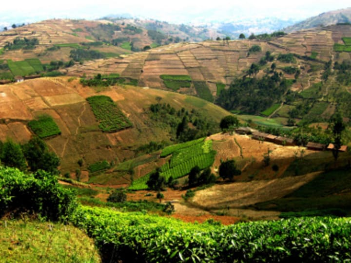 Investments in Africa's Agriculture Sector on the Rise | Devex