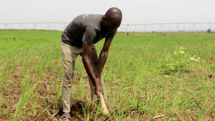 Agritech startups aim to lift Nigerian smallholder farmers