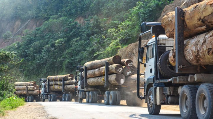 Countries band together to preserve central african rainforest devex a convoy of trucks carrying logs from tropical forests in gabon central africa in 2013 photo by jbdodane cc by nc sciox Image collections