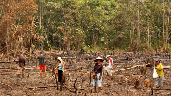 slash and burn in indonesia getting to the root of the problem devex