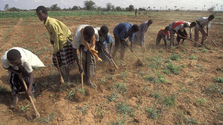 MIGA and OPIC team to unlock investments in African agriculture | Devex