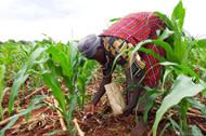 Fertilizer-kenya-fp