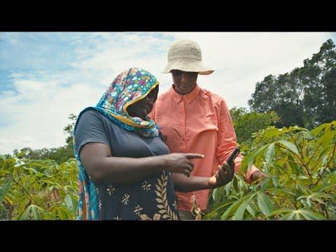 Cassava Video