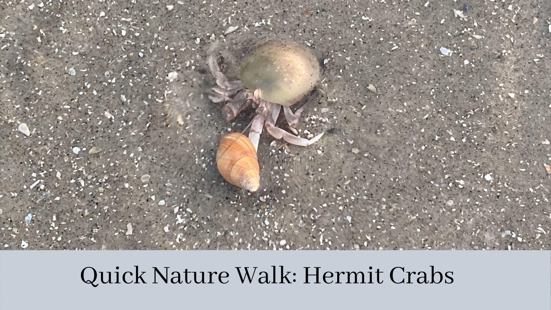 Some Quick Nature Videos