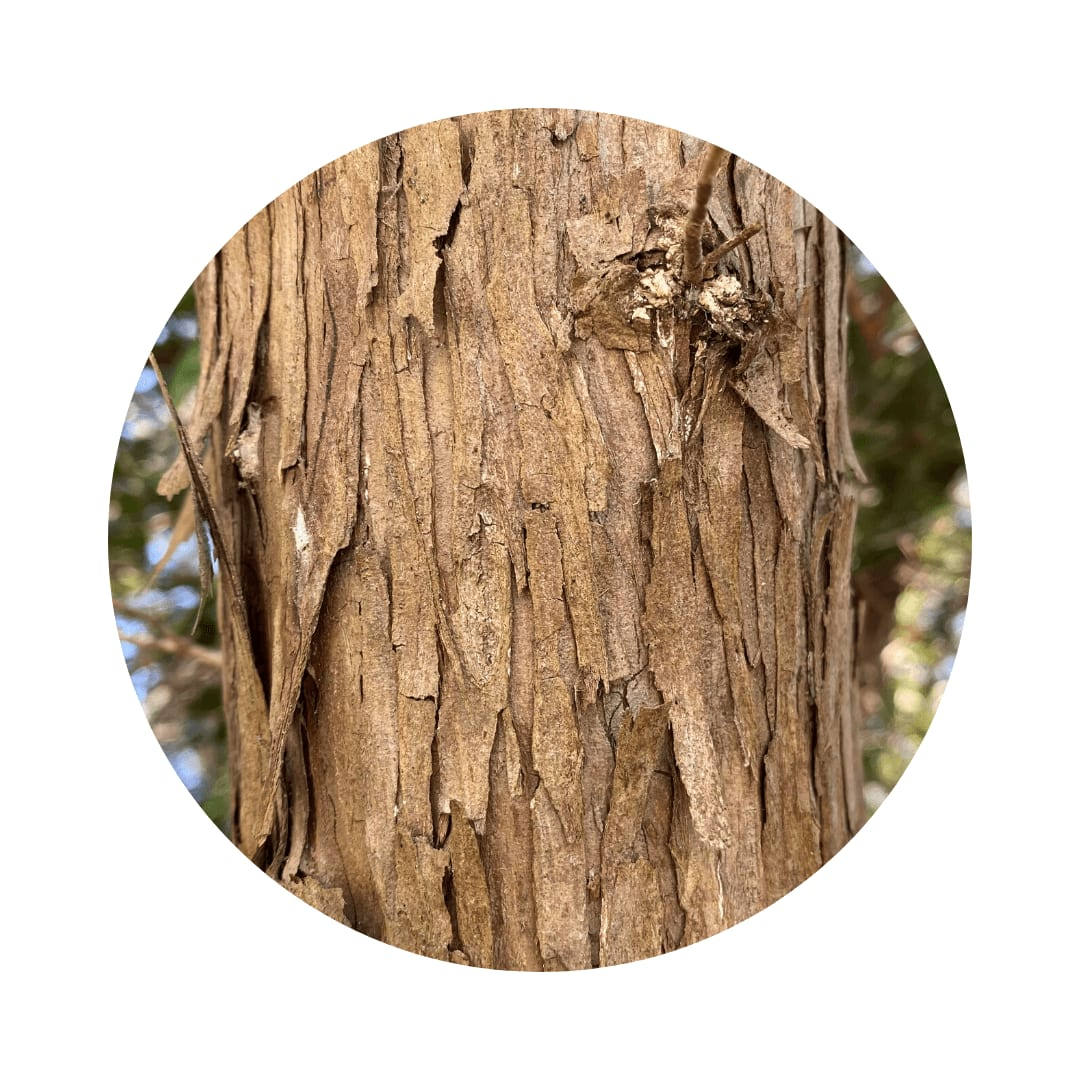 eastern red cedar bark