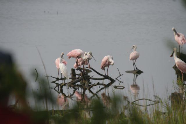Dewees Naturalist Jonathan Lutz featured in Audubon Magazine