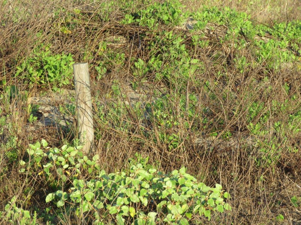 Cedar fencepost