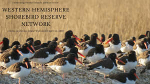 Dewees Island of International Significance to Shorebirds