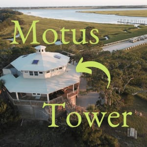 MOTUS Tower Provides a Whole New Look at Bird Migration