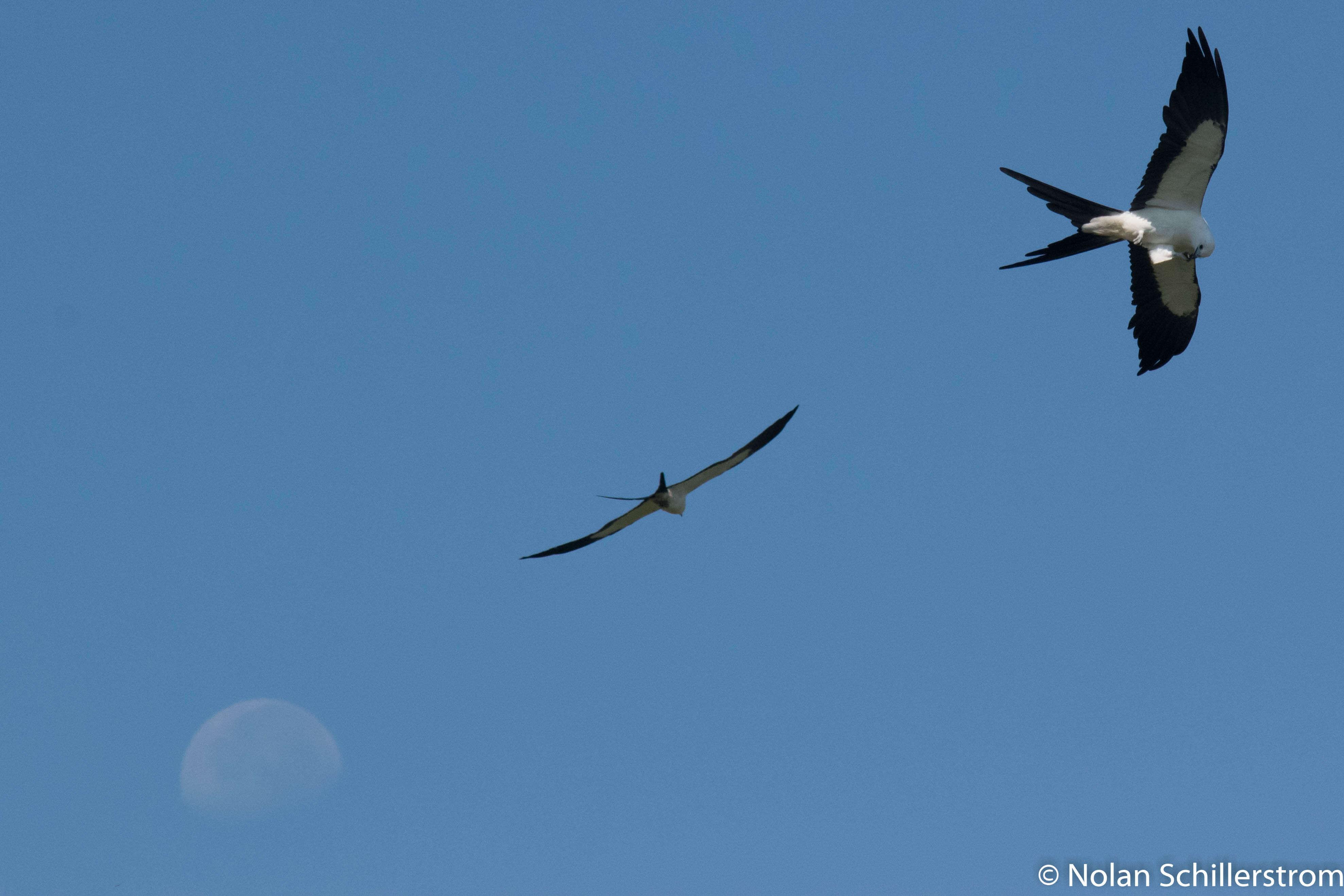 Kites with moon, courtesy Nolan Schillerstrom