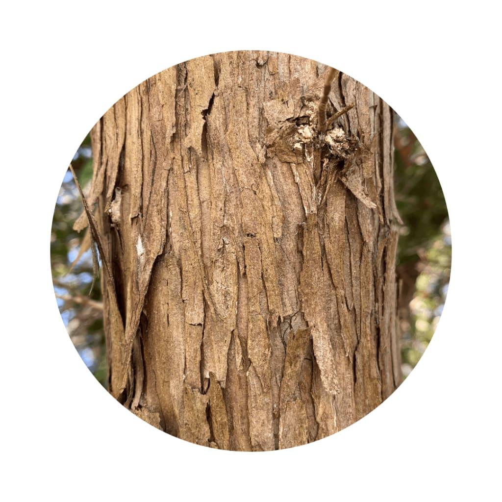 eastern red cedar bark