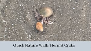 Read more about the article Some Quick Nature Videos