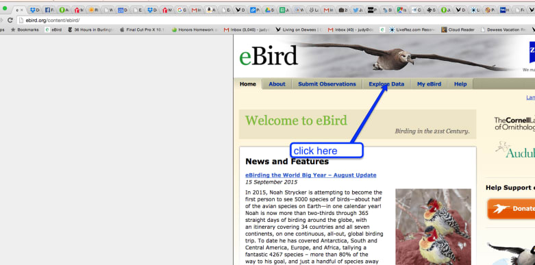 how to use ebird