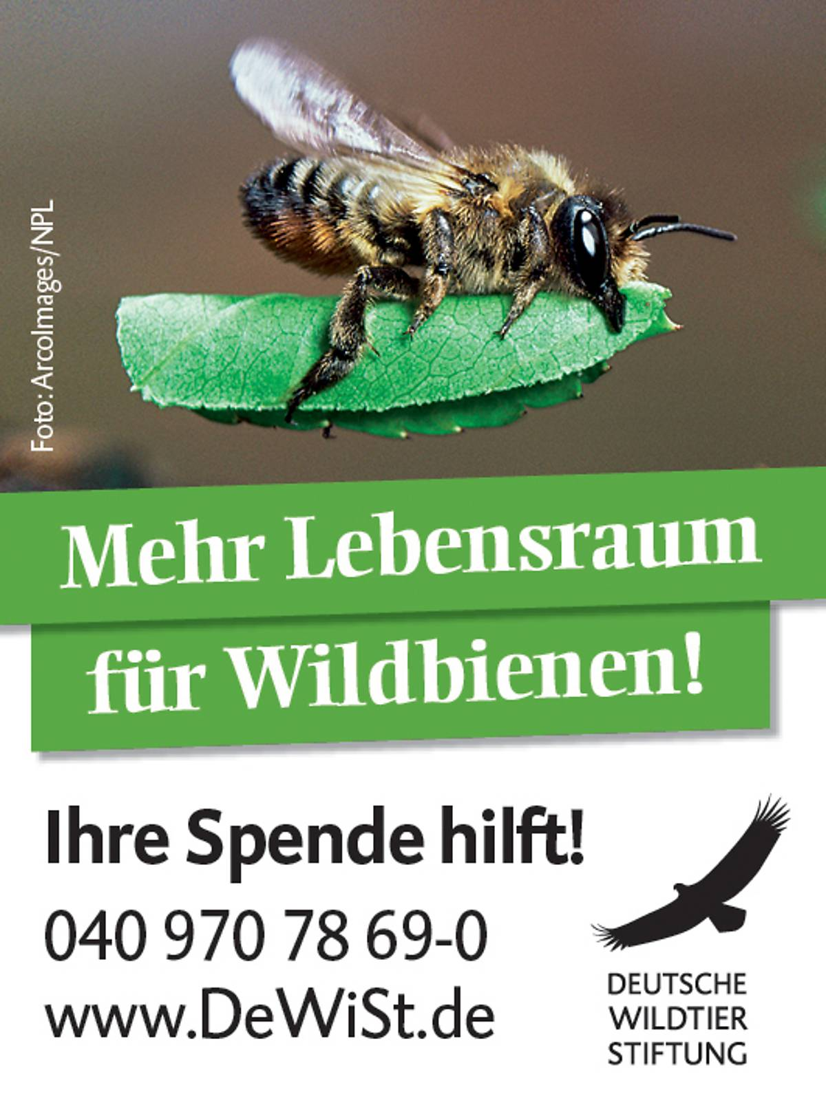 45x60_schutzprojekt-wildbiene