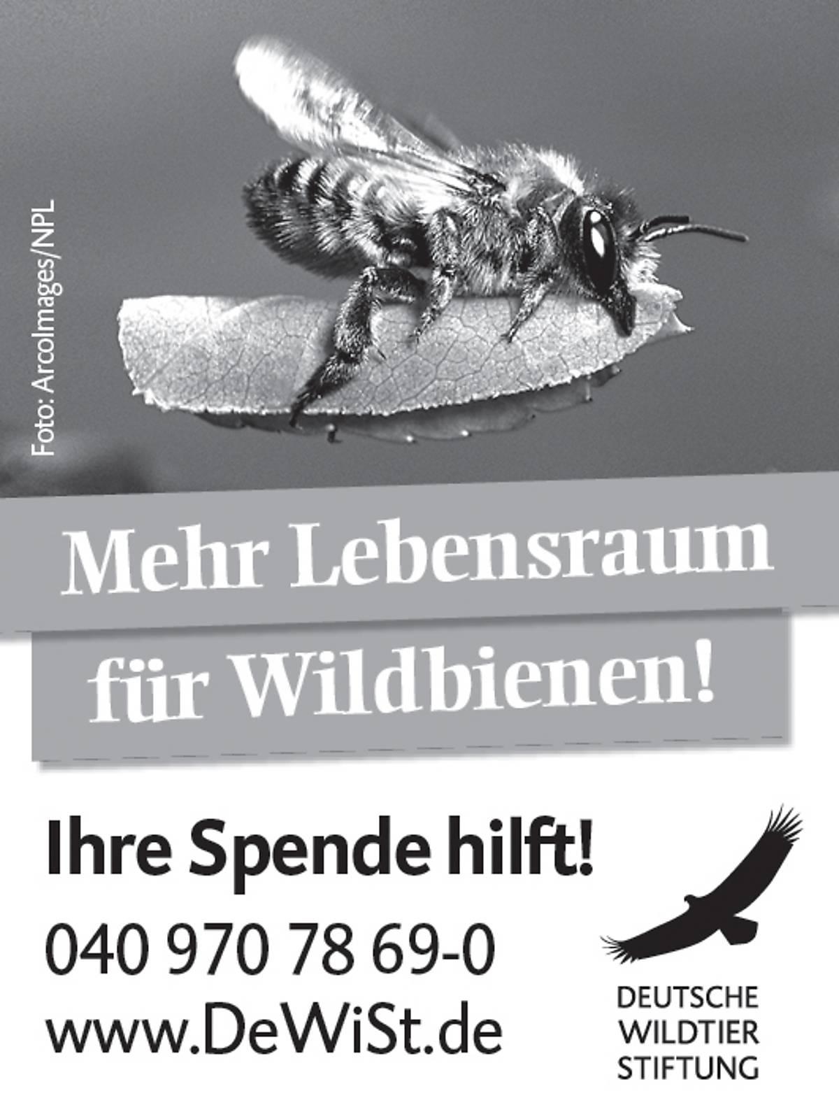 45x60_schutzprojekt-wildbiene_sw