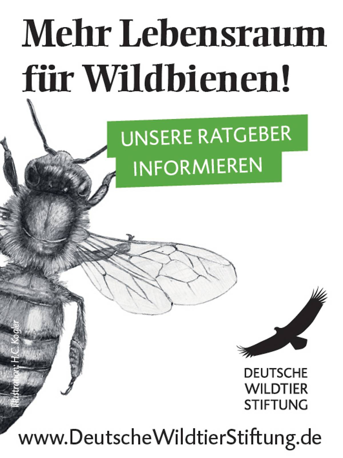 45x60_ratgeber-wildbiene