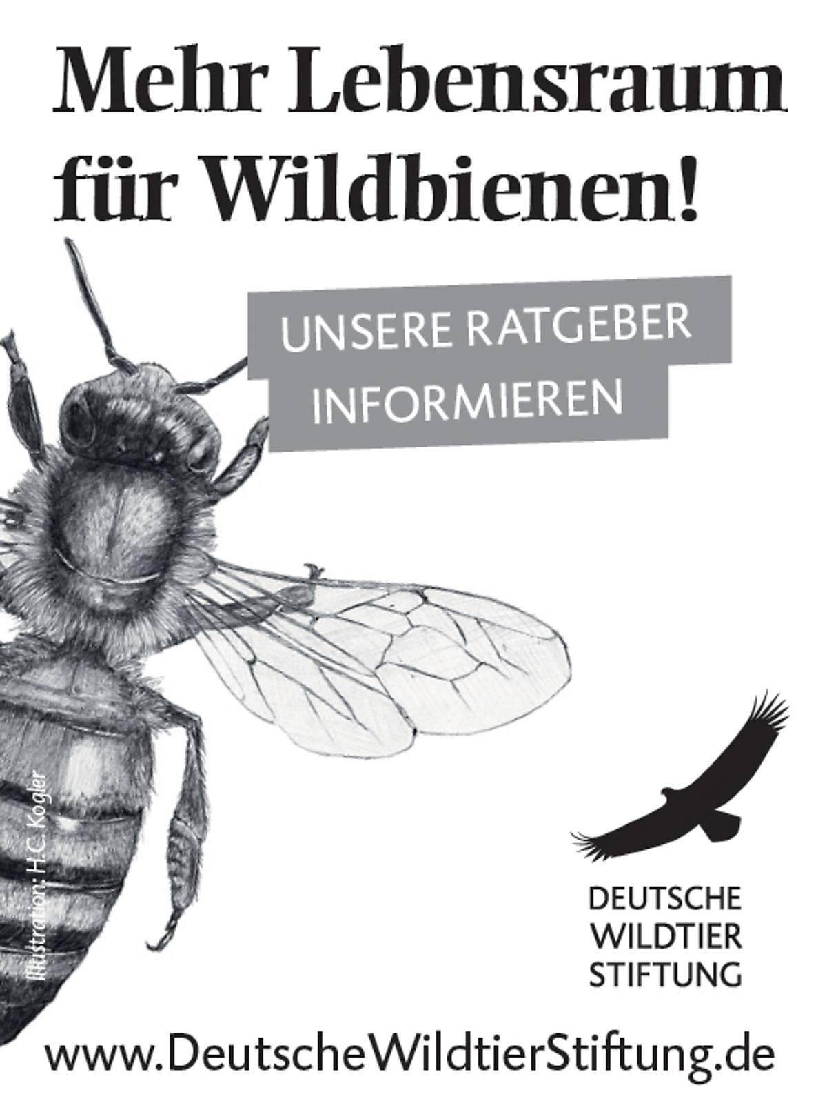 45x60_ratgeber-wildbiene_sw