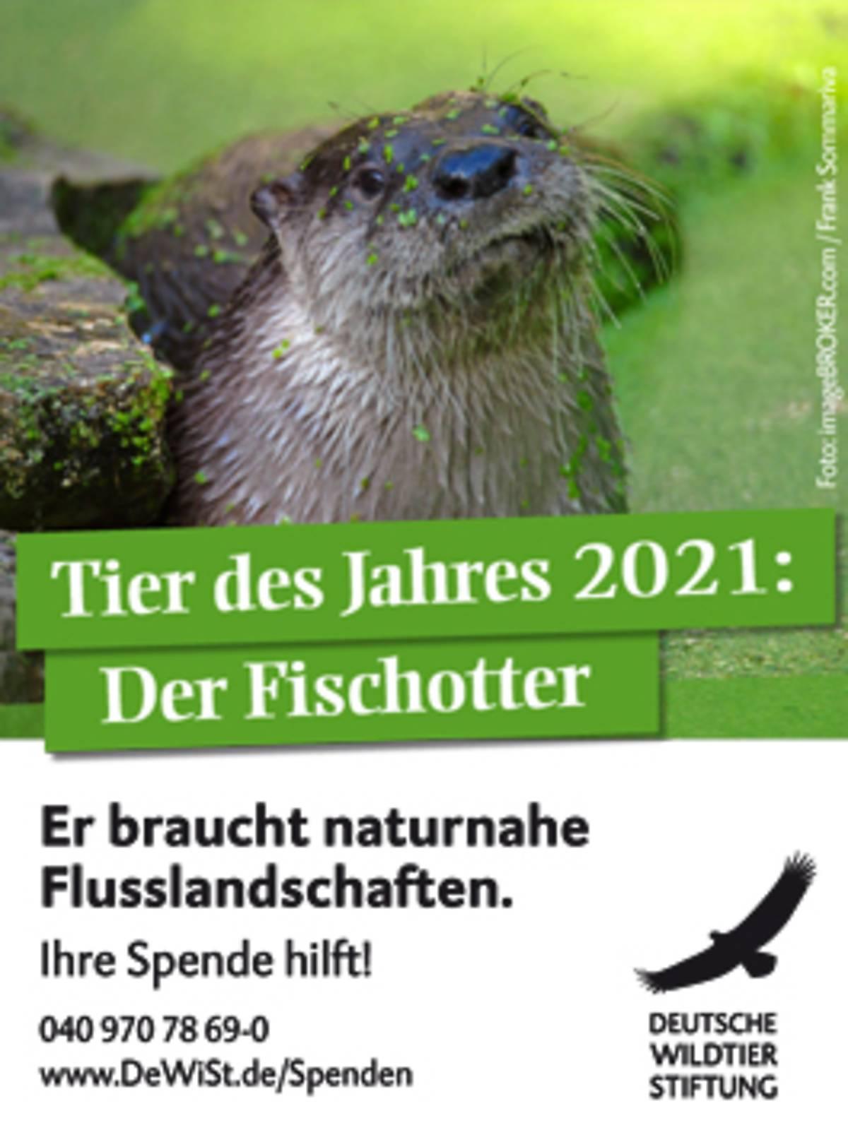 45x60_fischotter-tier-des-jahres