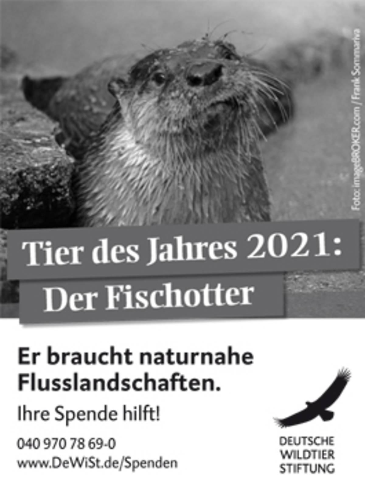 45x60_fischotter-tier-des-jahres2