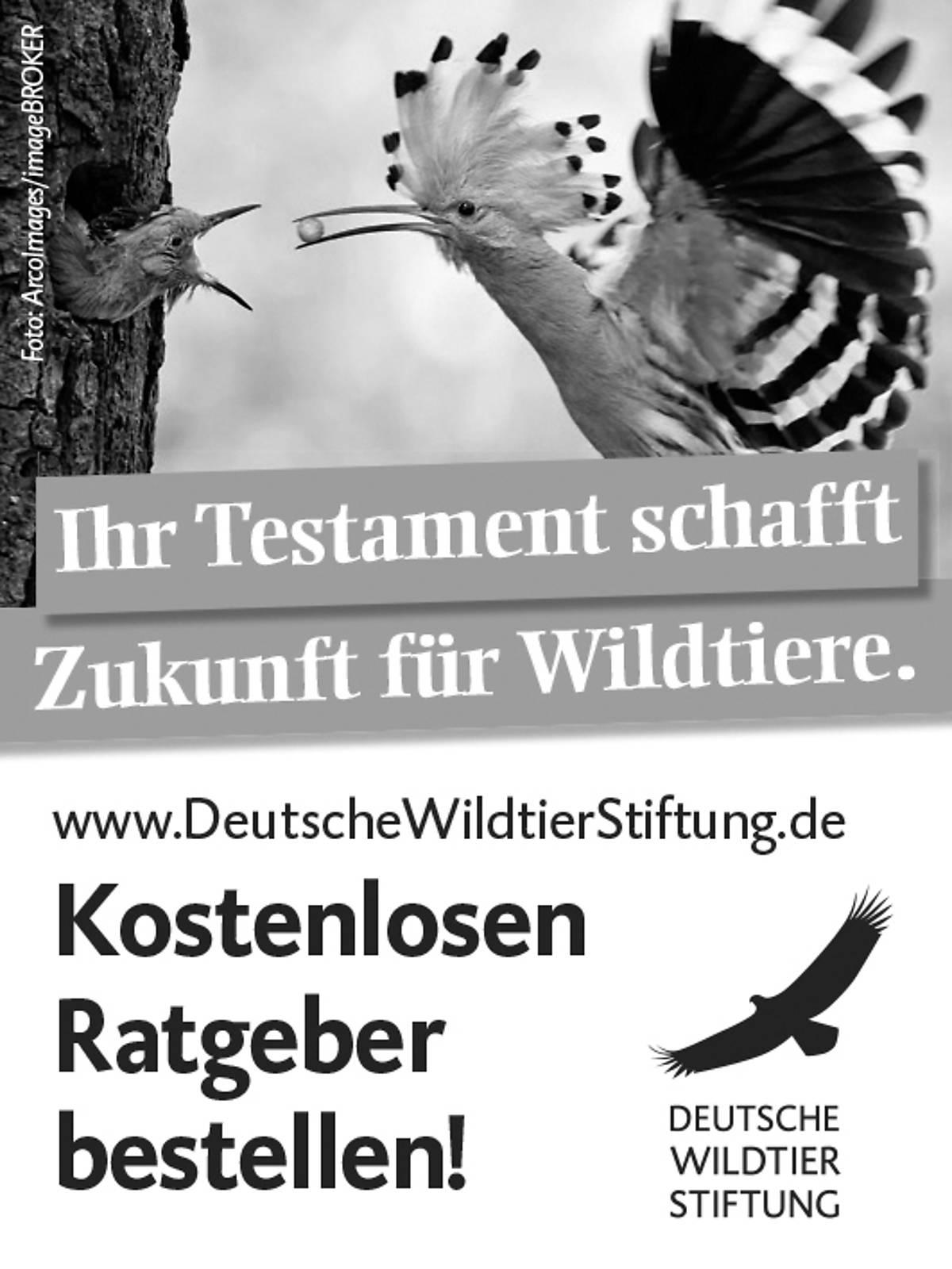 45x60_testamentsspende_2021_sw