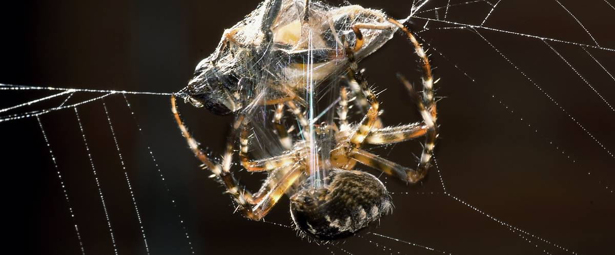 Wie man beim Spinnen Gewicht verliert