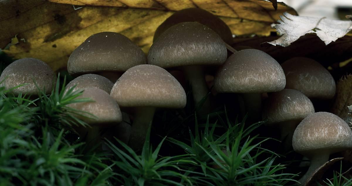 Pilze im Wald.