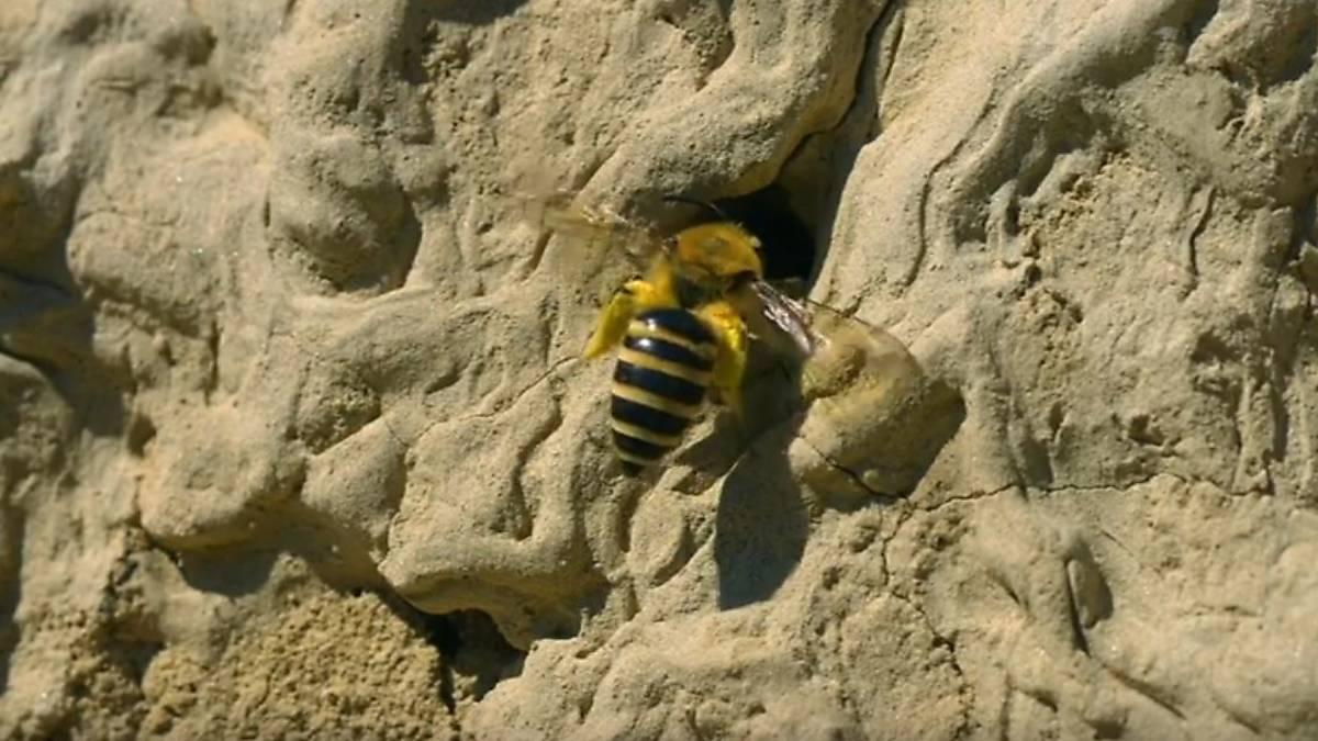 einblick-in-die-welt-der-wildbienen