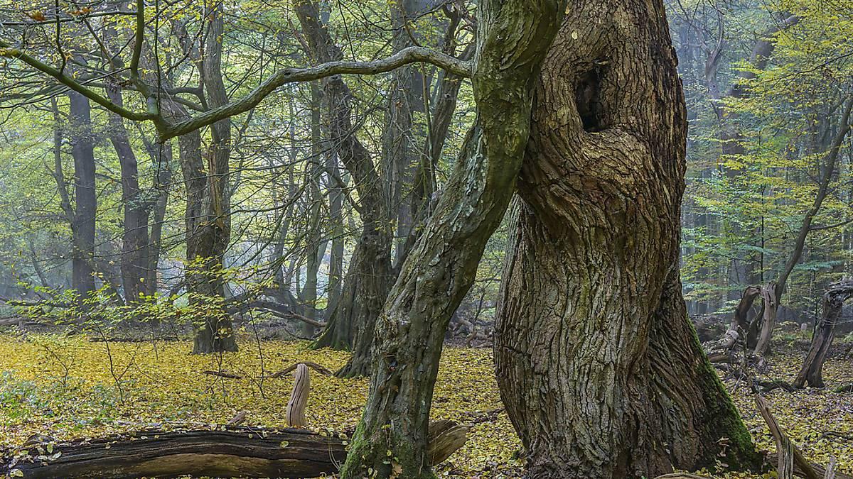naturschutz-wildnis-bild