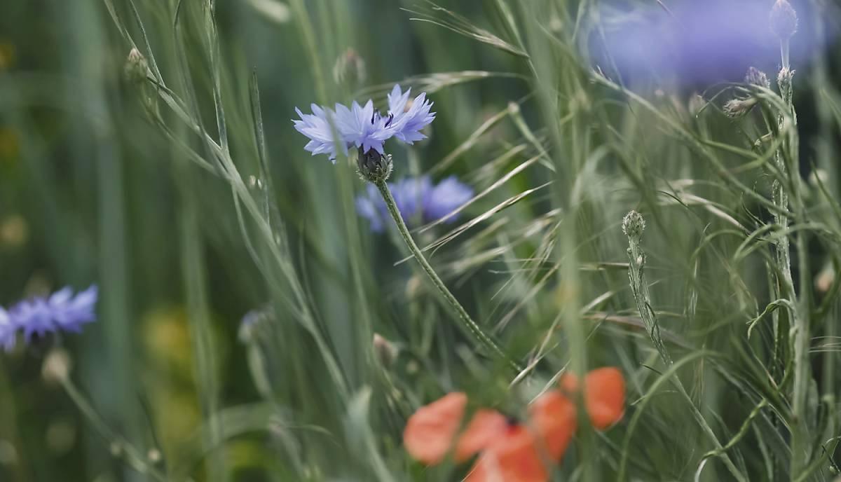 Wilde Flächen im Garten helfen den Schmetterlingen