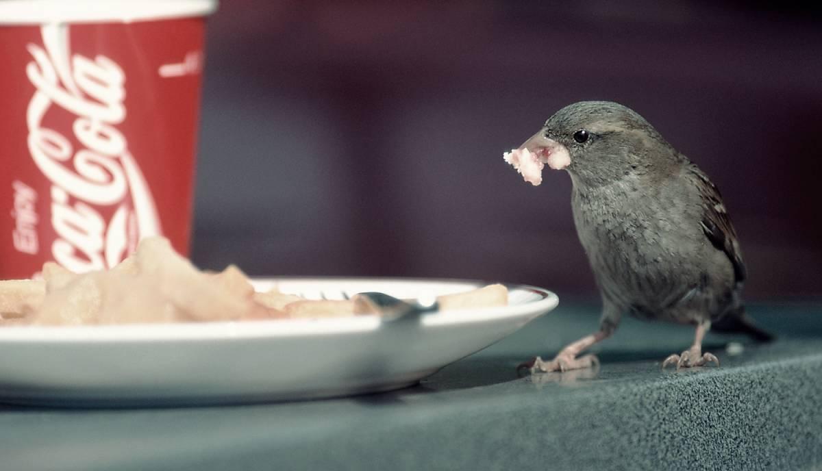 Spatz auf Tisch an Imbissbude